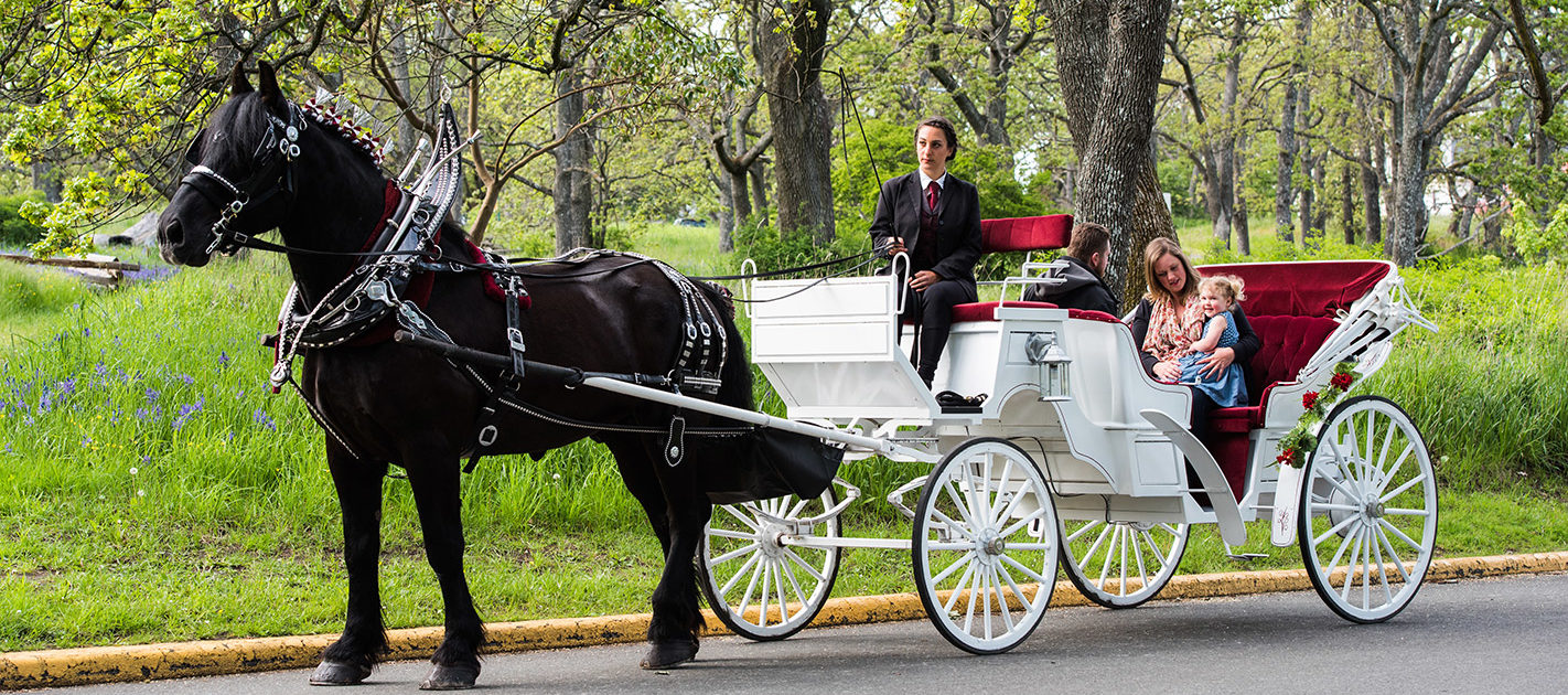 Image result for horse buggy