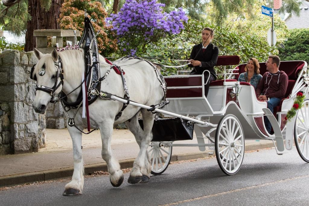 Horse Drawn Carriage Tours in Victoria BC - Tally-Ho Tours