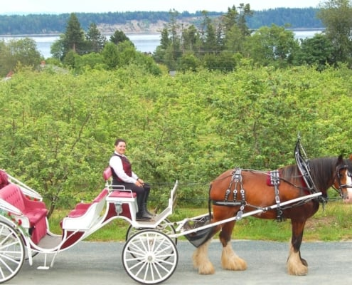 tally ho sea cider tour - carriage and driver